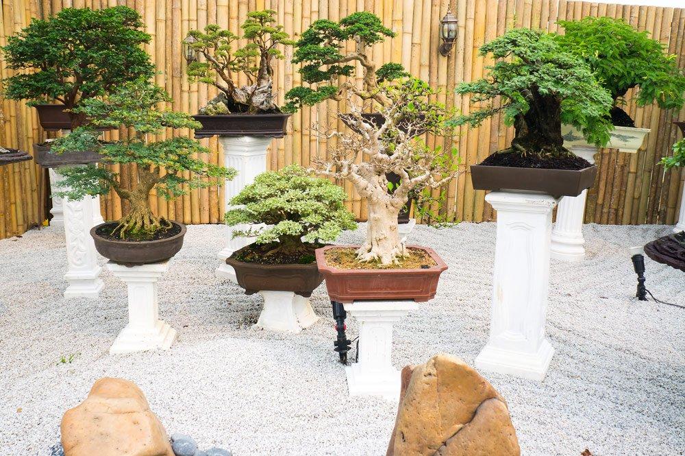 Zen-Garten: Bonsais