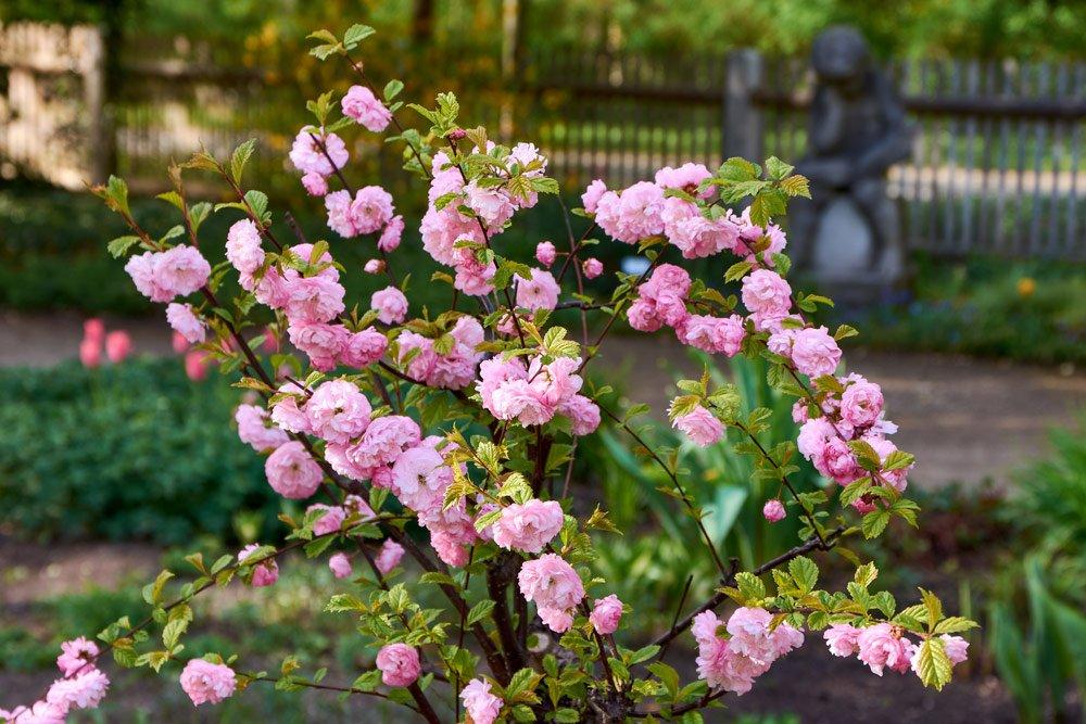 Blütenfarbe Rosa