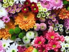Blumenfarben und ihre Bedeutung