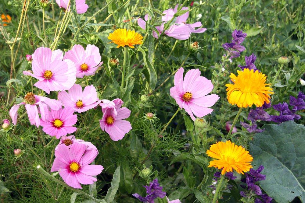 Cottage-Garten  Blumen