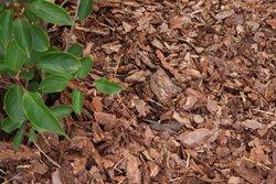 Aus Grünschnitt Mulch machen