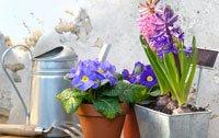 garten Immobilienwert erhöhen Pflanzen