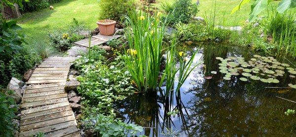 Gartenteich beleuchten Möglichkeiten