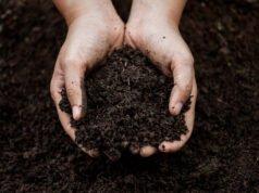 Nährstoffreiche Gartenerde selbst herstellen