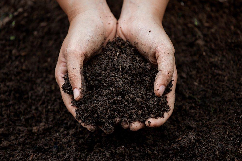Nährstoffreiche Erde selbst herstellen – Schritt für Schritt Anleitung