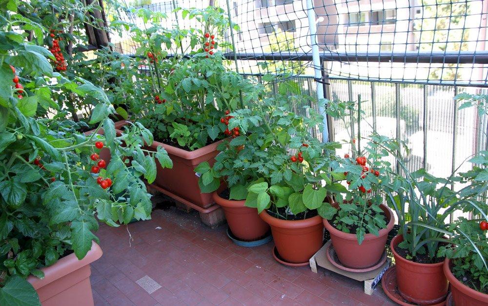 Gemüse auf dem Balkon pflanzen