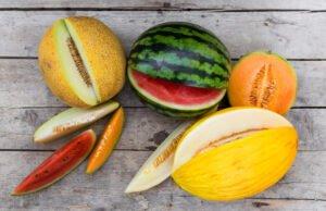 Melonensorten für den Gartenanbau
