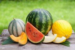 Melonen-Sorten für den Gartenanbau
