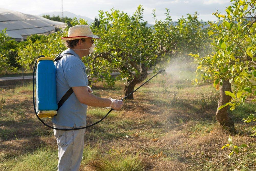 Quittenbaum Fungizid