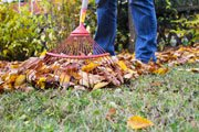 Laub im Herbst sofort vernichten
