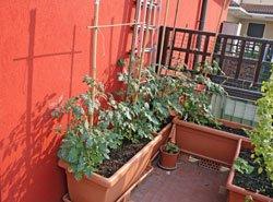 Gemüse Auf Dem Balkon Pflanzen ? 9 Gemüsesorten Für Anfänger ... Gemuse Im Blumentopf Garten Balkon Tipps