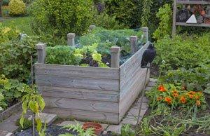 Gurken Hochbeet anbauen Tipps Anleitung