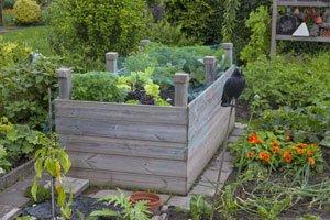 Gurken Im Hochbeet Pflanzen Tipps Fur Einen Ertragreichen Anbau