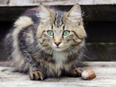 Katze und Schnecke im Garten