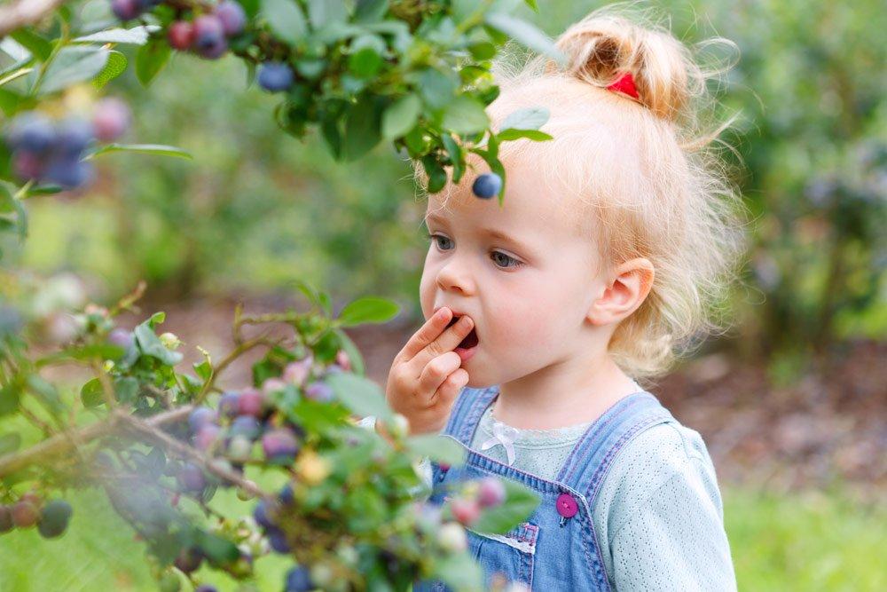 Naschgarten anlegen – Leckere Köstlichkeiten nicht nur für Kinder
