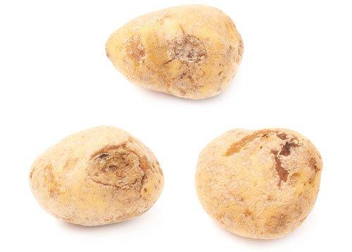 Kartoffel-Krankheiten – Erkennen und Bekämpfen
