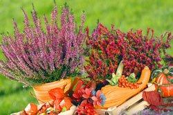 Balkon herbst Deko Pflanzengefäß befüllen