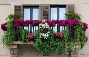 Balkon mit Blumen bepflanzen