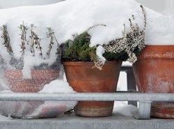 Balkonpflanzen Winterfest Machen 5 Wichtige Tipps