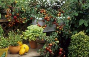Gemüse im Topf pflanzen