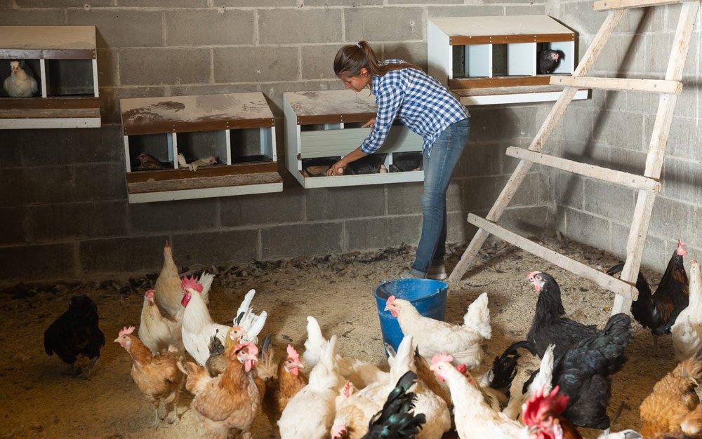 Hühnerstall Ausstattung