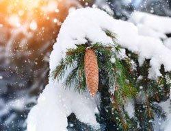 Äste können durch zu viel Schnee brechen