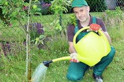 Apfelbaum pflanzen Anleitung Tipps