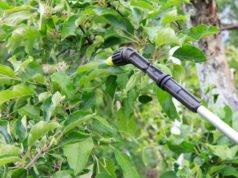 Apfelbaum Schädlinge