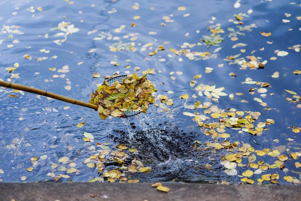 Schwimmteich vom Laub befreien