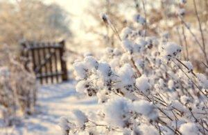 Schneelast auf Pflanzen
