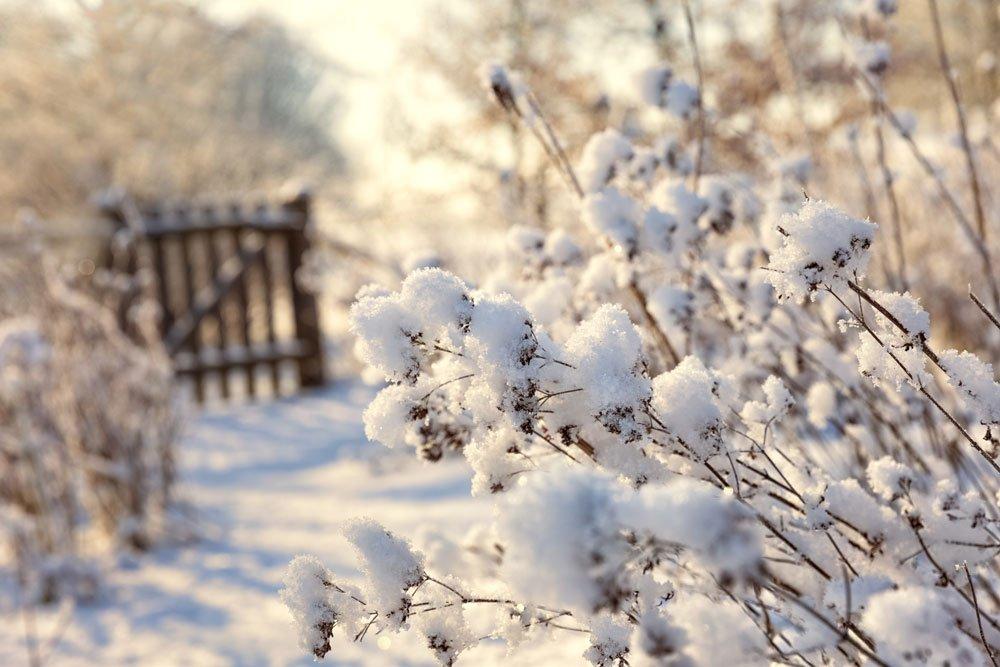 Pflanzen vor Schneelast schützen – 4 wichtige Tipps