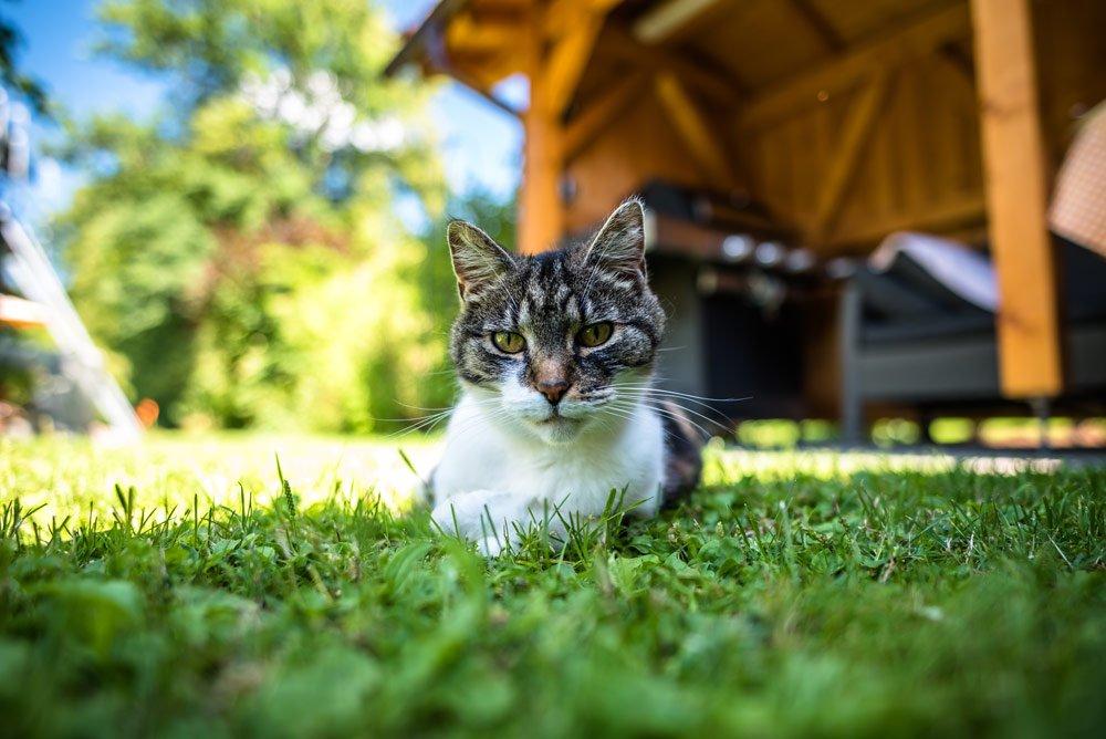 Garten katzensicher machen – 6 wichtige Tipps