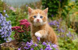 Katze an den Garten gewöhnen