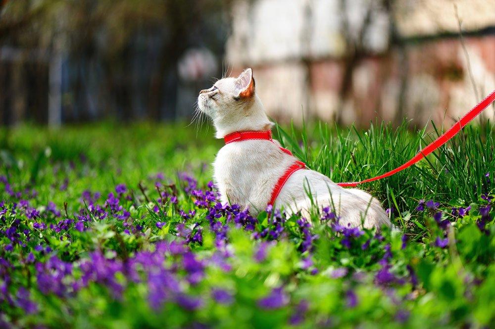 Katze an den Garten gewöhnen mit einem Katzengeschirr