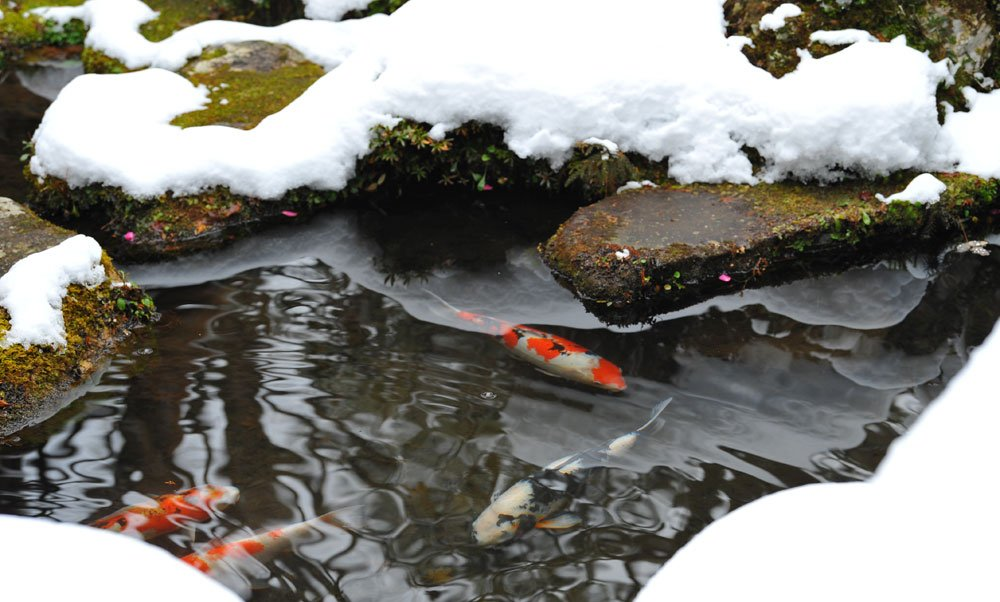 Koi Teich winterfest machen