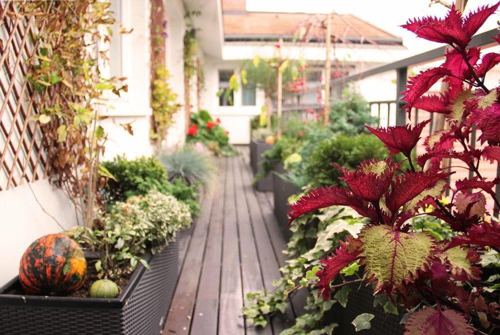 Nordbalkon bepflanzen – Pflanzen & Pflegehinweise für den Schattenbalkon vorgestellt