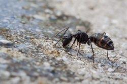 Hausmittel Gegen Ameisen Gartentipps Com Tipps Fur Deinen Garten