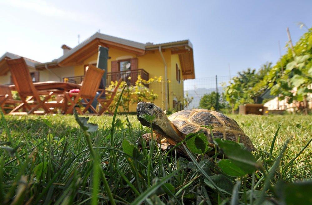 Schildkröte im Garten halten