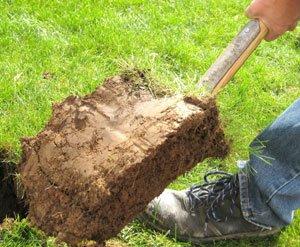 Arbeitsschutz im Garten: So einfach vermeiden Sie Unfälle