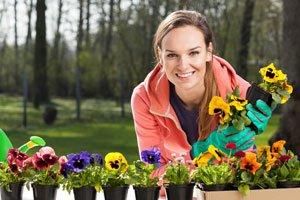 Stiefmütterchen lassen sich über Samen vermehren