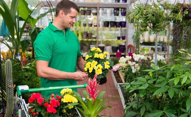 Pflanzen kaufen und transportieren