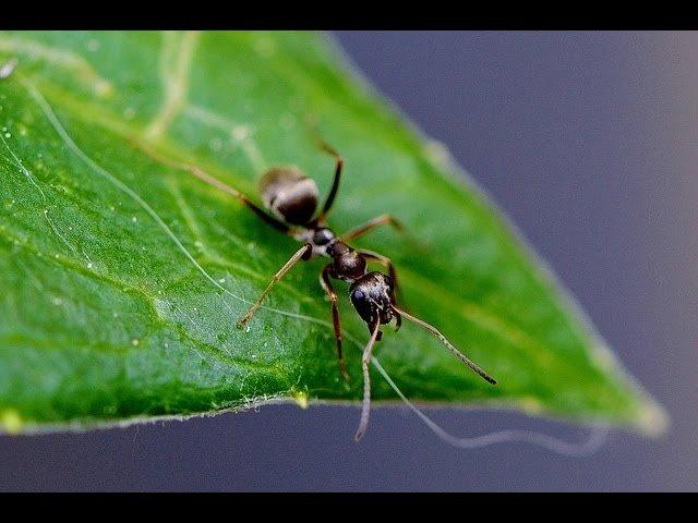 ameisen hausmittel ameisen vertreiben ohne gift 10 nat. Black Bedroom Furniture Sets. Home Design Ideas