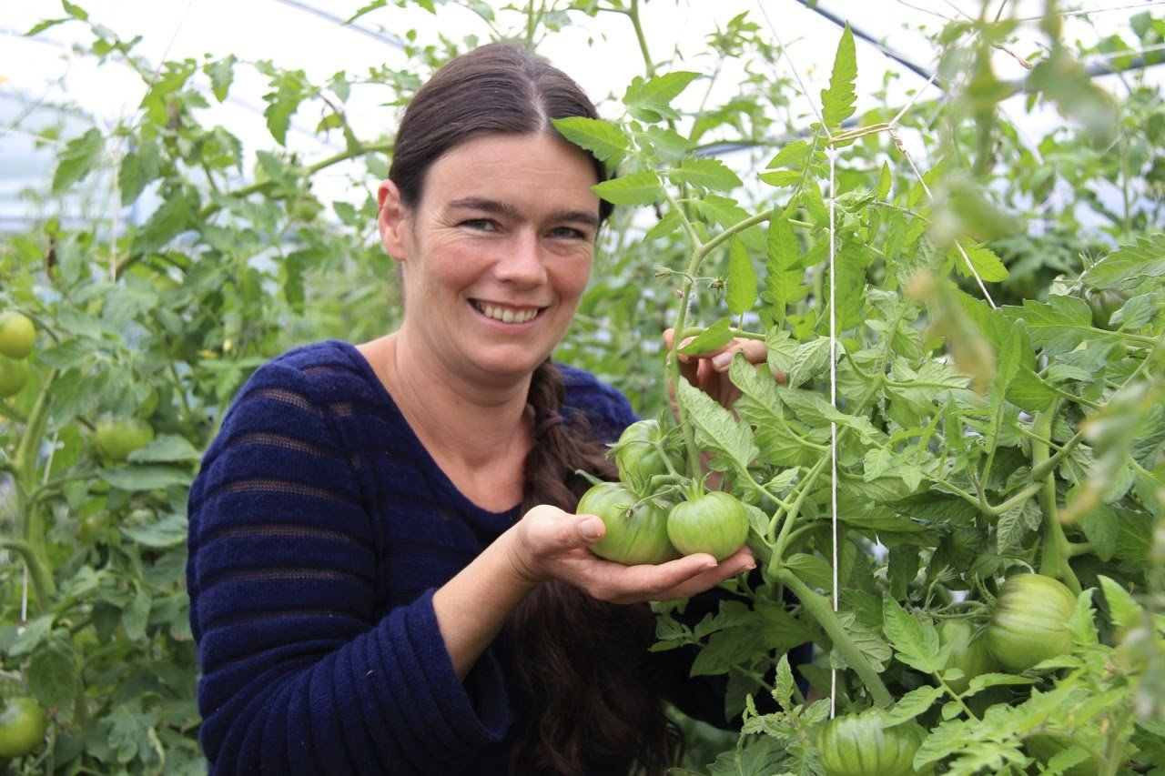 Video: Tomaten Braunfäule – Ursache & Tipps