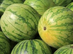 Melone Reifegrad erkennen Tipps