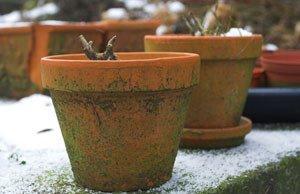 Pflanzkübel winterfest machen Tipps Regeln