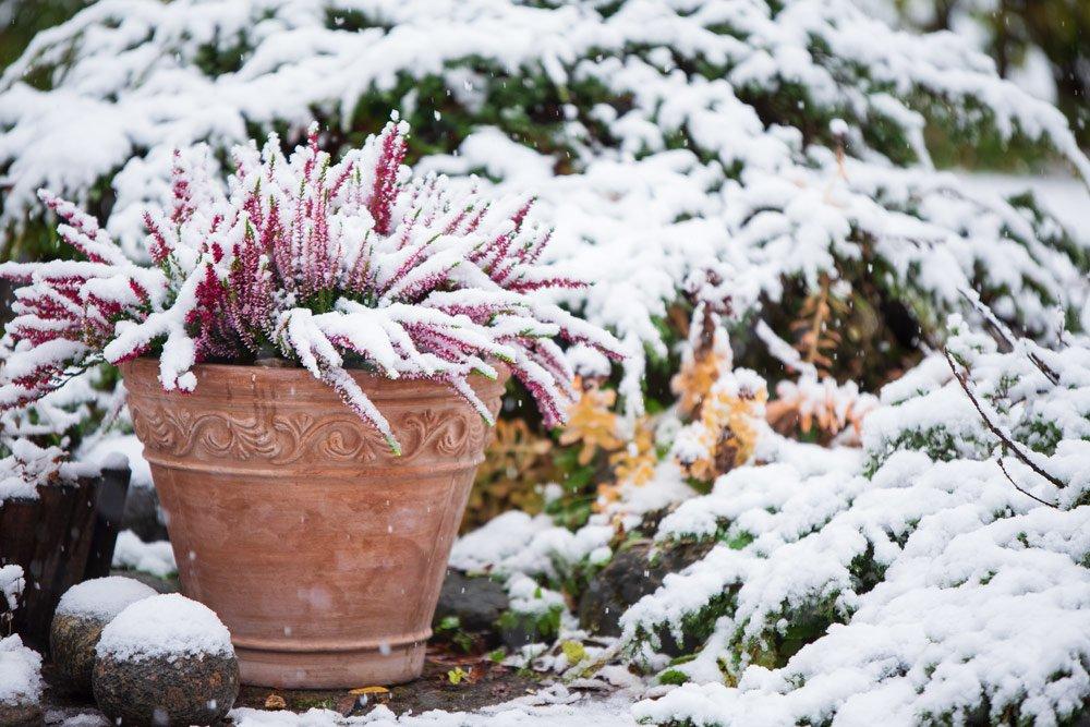 Pflanzkübel winterfest machen