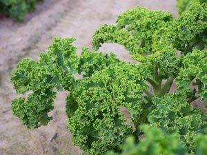 Grünkohl Nährwerte – Das steckt drin