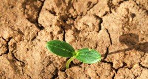 Schwere Böden: Definition und Tipps