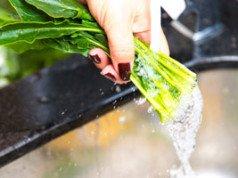 Spinat dünsten Anleitung Tipps