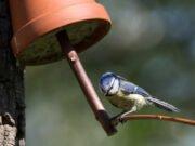 Vogelfutterhaus aus Tontopf basteln